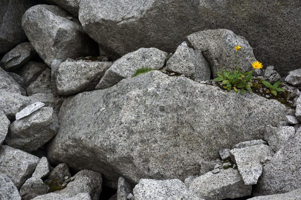 Das, das Gebiet prägende, Granitgestein.