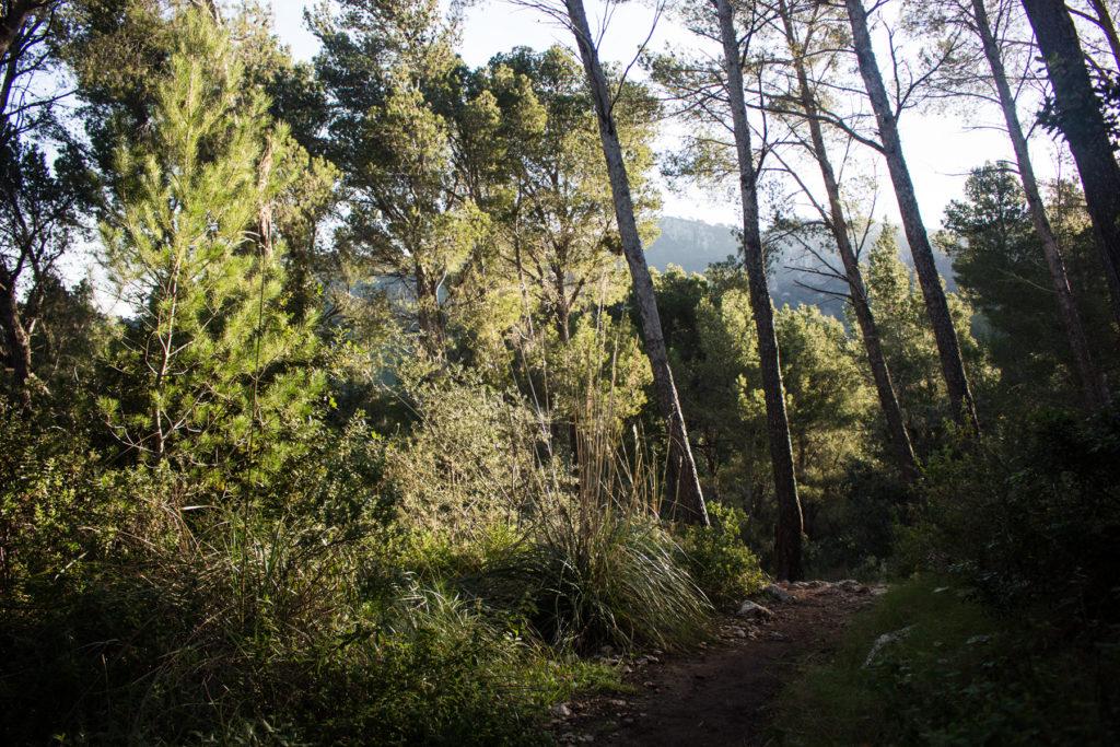Mallorquinische Flora